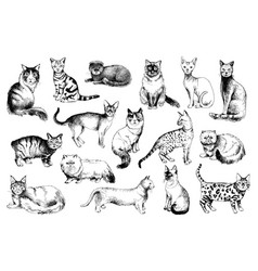 16 hand drawn cat breeds vector