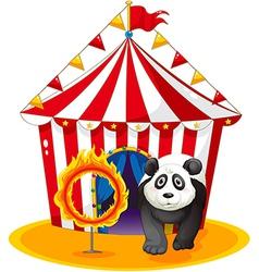A panda beside fireball vector