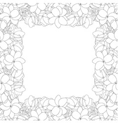 Arabian jasmine outline border on white vector