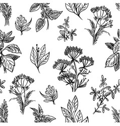 sketch herbs and flowers seamless pattern vector image