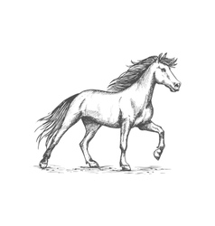 White horse stomping hoof sketch portrait vector image vector image