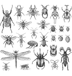 Big set insects bugs beetles and bees many vector