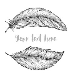 detailed hand drawn feathers vector image