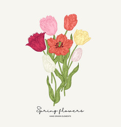 red yellow and pink tulips bouquet spring vector image