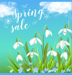 Snowdrops and green grass on a blue sky background vector