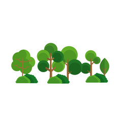 tree bush forest natural image vector image