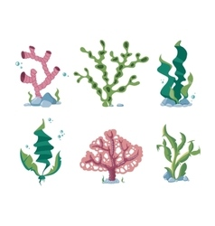Underwater seaweeds aqua kelp ocean and aquarium vector