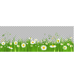 Flowers and green grass vector