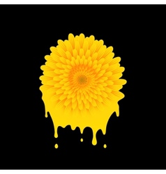 paint color of a flower vector image