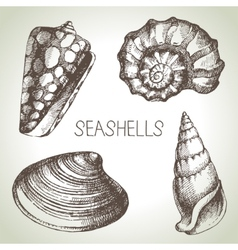 Seashells hand drawn set Sketch design elements vector image