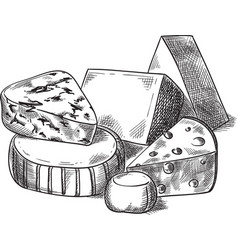 cheeses vector image