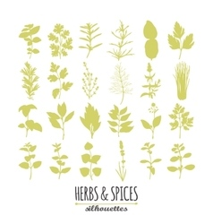 Collection of hand drawn spicy herbs silhouettes vector