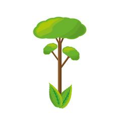 isolated big tree vector image