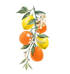 Watercolor citrus fruits vector