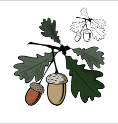 Acorn and leaf vector image