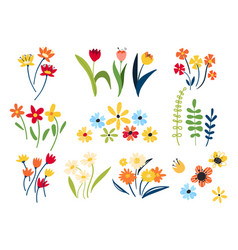collection wild and garden blooming flowers vector image