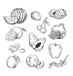 drawing various fruits vector image