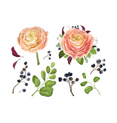 Floral big element set pink peach ranunculus vector
