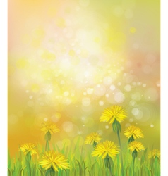 dandelions spring background vector image vector image
