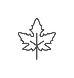 maple leaf line icon vector image