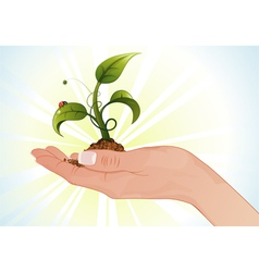 hand with sprout vector image