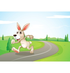 A running rabbit at the road vector
