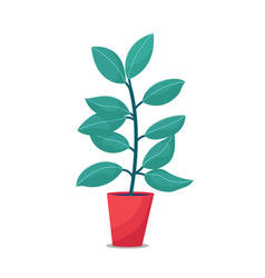 Ficus rubber plant houseplant in red flowerpot vector