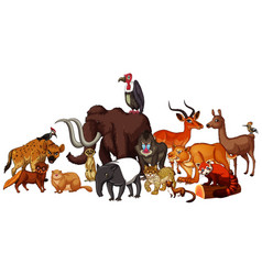 isolated picture wild animals vector image