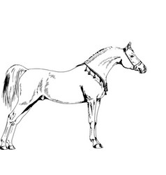 race horse without a harness drawn in ink by hand vector image