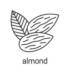 Almond linear icon vector