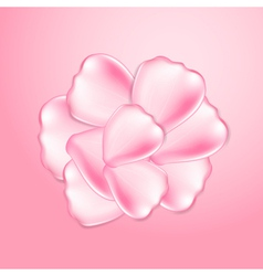 Beautiful pink rose petals vector