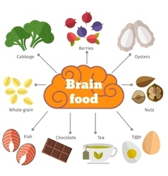 Brain food flat infographics vector image