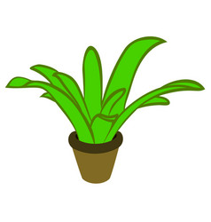cartoon plant in pot vector image