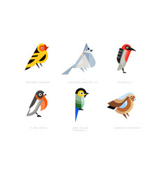 Colorful stylized birds collection western vector