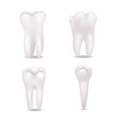 realistic detailed 3d white healthy teeth icons vector image