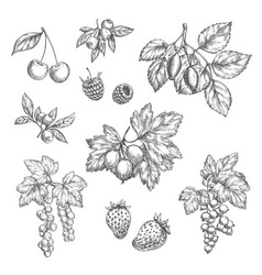 sketch icons of fresh berries and fruits vector image vector image