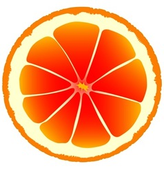 Blood Orange vector
