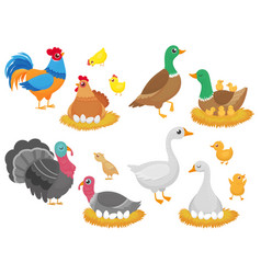 farm birds poultry chicken goose duck bird and vector image