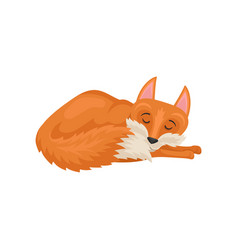 Flat design sleeping red fox mammal vector