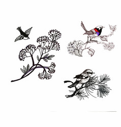 hand drawn painting with colorful birds on vector image