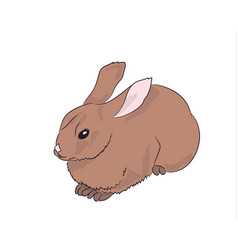 hare lies vector image
