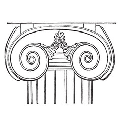 Ionic capital the temple of apollo at base vector