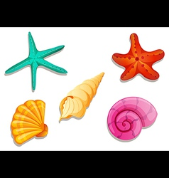 Colourful seashells vector