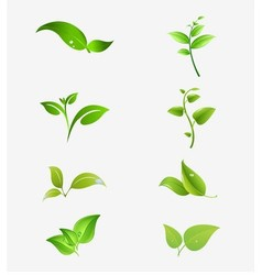 Natural symbols with leaf vector