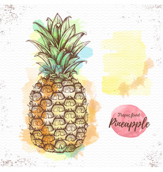 Realistic of tropic fruit pineapple vector