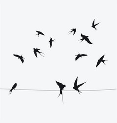 silhouettes swallows sitting on wires black vector image