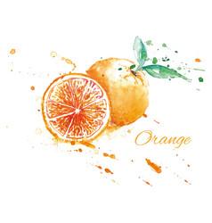 watercolor fresh orange vector image