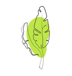one line drawing contour drawing banana leaves vector image