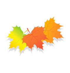 set of autumn leaves icon isometric style vector image