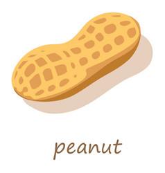 peanut icon isometric 3d style vector image